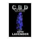 CBDS001501 - AUTO LAVENDER 1 SEME FEMM CBD SEEDS