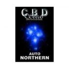 CBDS001601 - AUTO NORTHERN 1 SEME FEMM CBD SEEDS