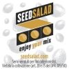 SEX01425 - MAXI CLOUD 1X25 SEMI AUTOFIORENTI FEMM SEEDSALAD