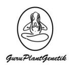 GURUJAMA05 - AUTO JAMAICAN BLUE MONTAIN GURU PLANT 5 SEMI FEMM IN BOX LEGNO